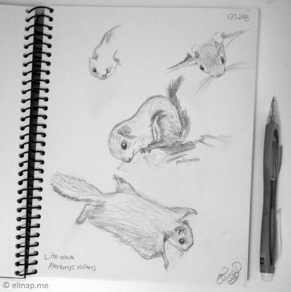 elinap - Studying animal anatomy, pencil on paper